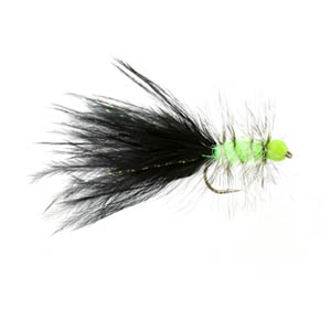 Hot Head Black & Lime Tadpole